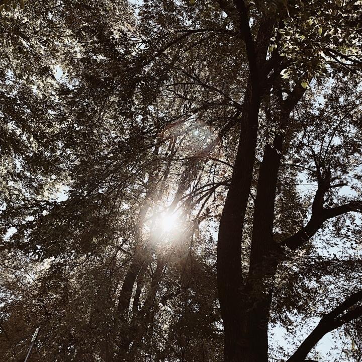 Sunlight peeking between trees in Albury, New South Wales, Australia.