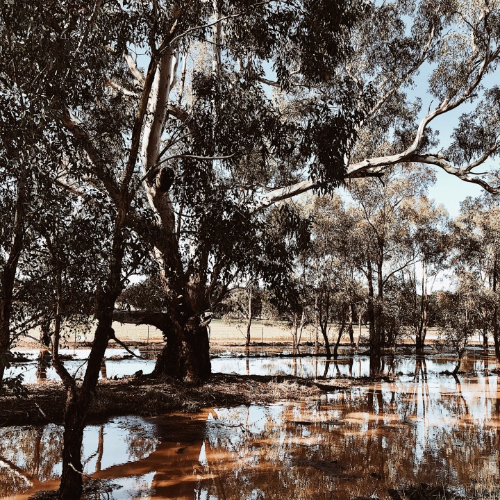 Flooded paddocks at Downside, New South Wales, Australia.