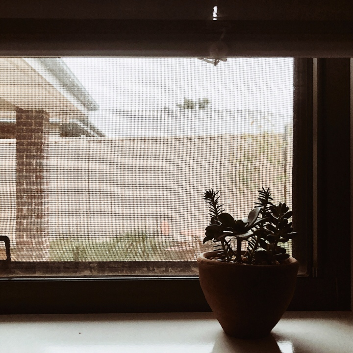Succulent in the dark of morning, sitting on a windowsill.