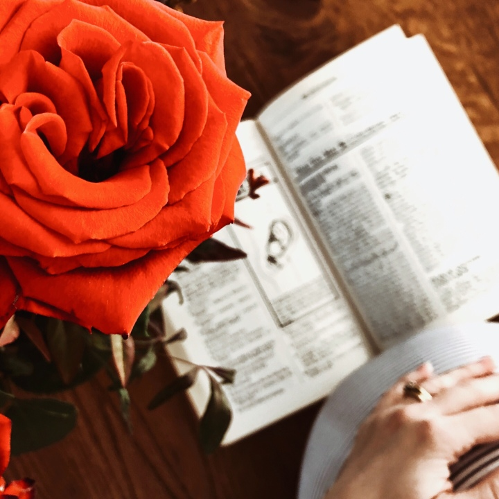 Pregnant woman with hand on belly reading a baby book near a vase of red roses.