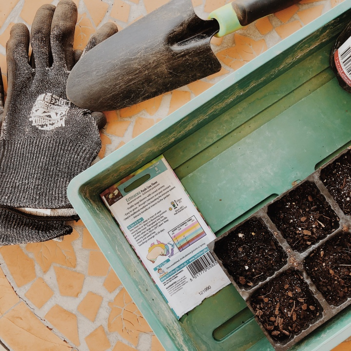 Looking down on seedling trays, gardening gloves and trowel.