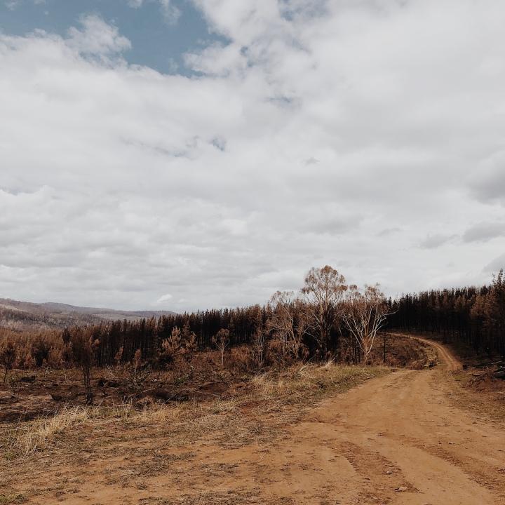 Burnt out pine plantations near Laurel Hill, New South Wales, Australia.