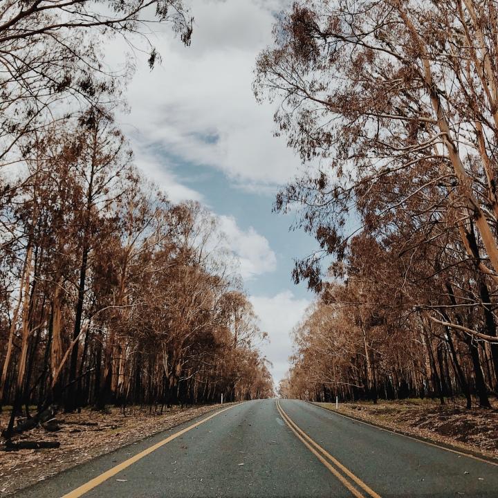 Burnt out bushland near Laurel Hill, New South Wales, Australia.