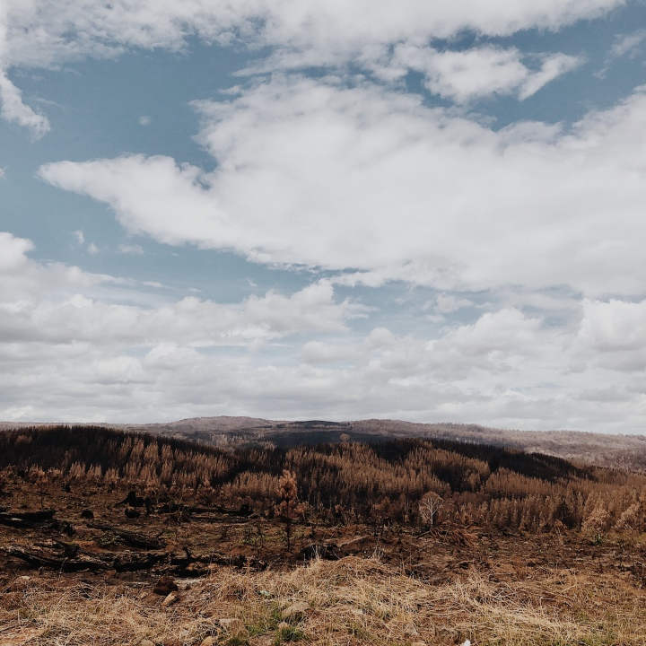 The fire affected Bago State Forest near Laurel Hill, New South Wales, Australia.
