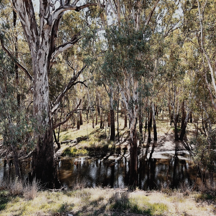 The banks of the Murrumbidgee River in Wagga Wagga, New South Wales, Australia.