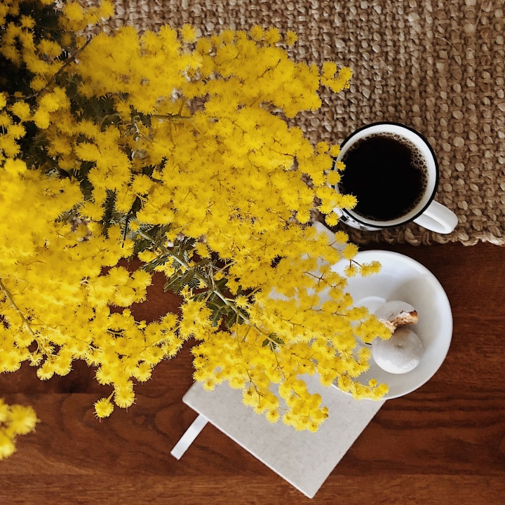 Cup of tea and plate of biscuits beneath a vase of wattle.
