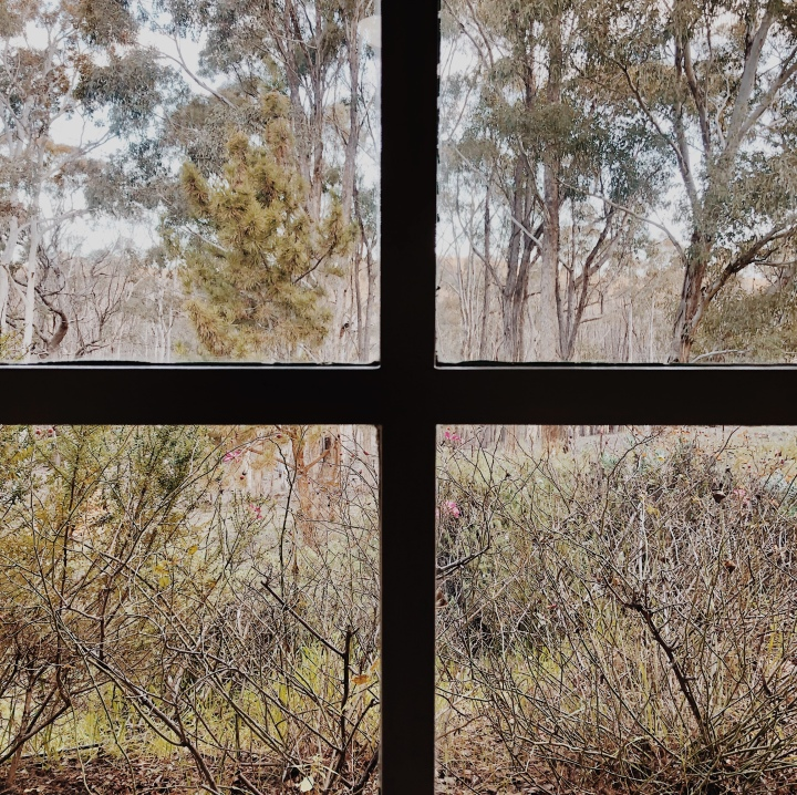 View of bushland from the Hillside Airbnb near Gundaroo, New South Wales, Australia.
