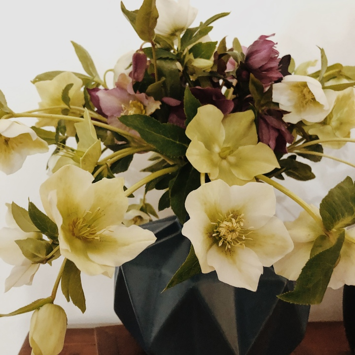 Arrangement of hellebores in a vase.