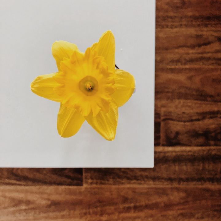 Yellow daffodil sitting in a vase on a white timber table.