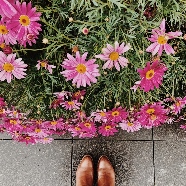 Looking down at a bush of pink flowers and a pair of feet in tan leather boots.