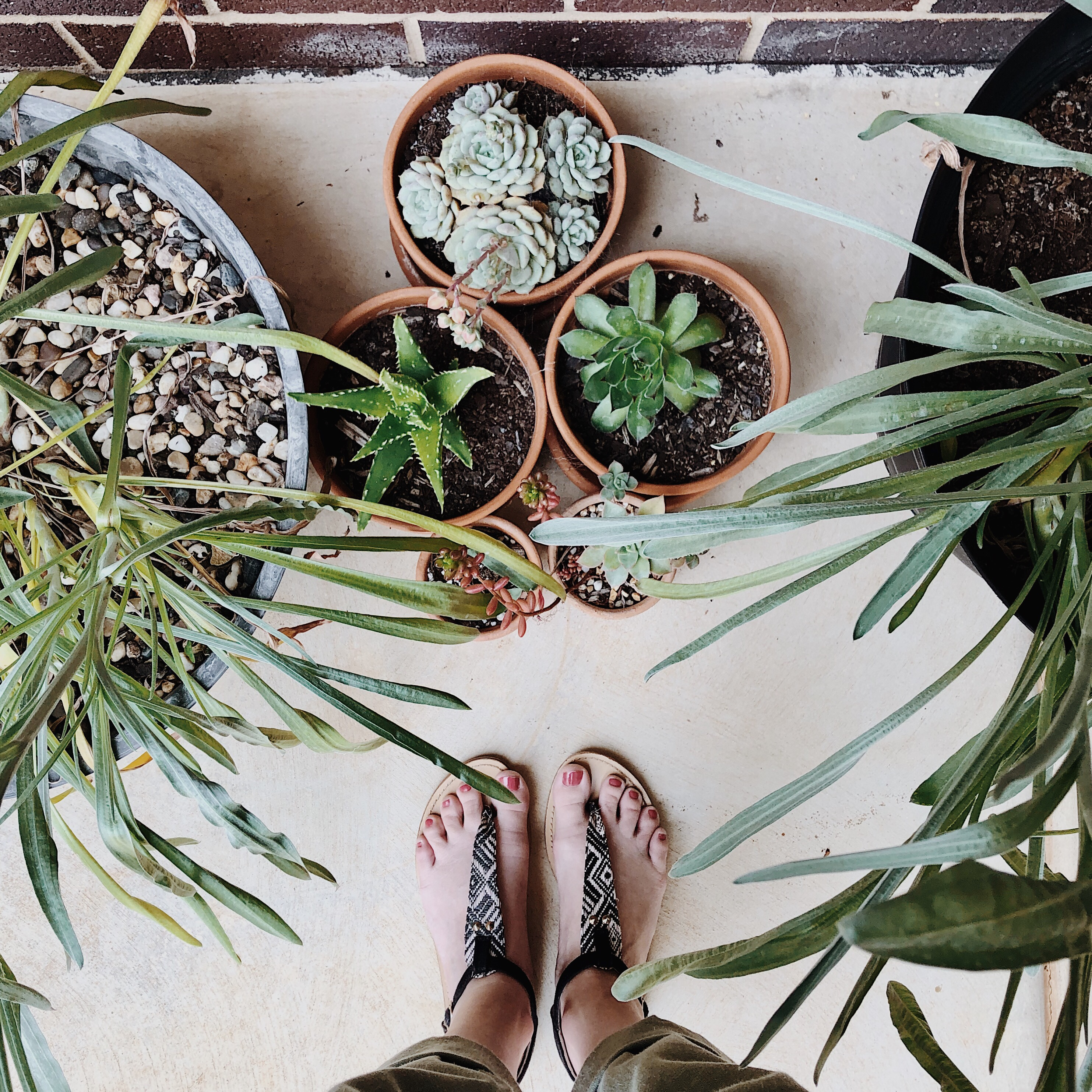 Looking down at a woman's feet in sandals surrounded by pot plants.