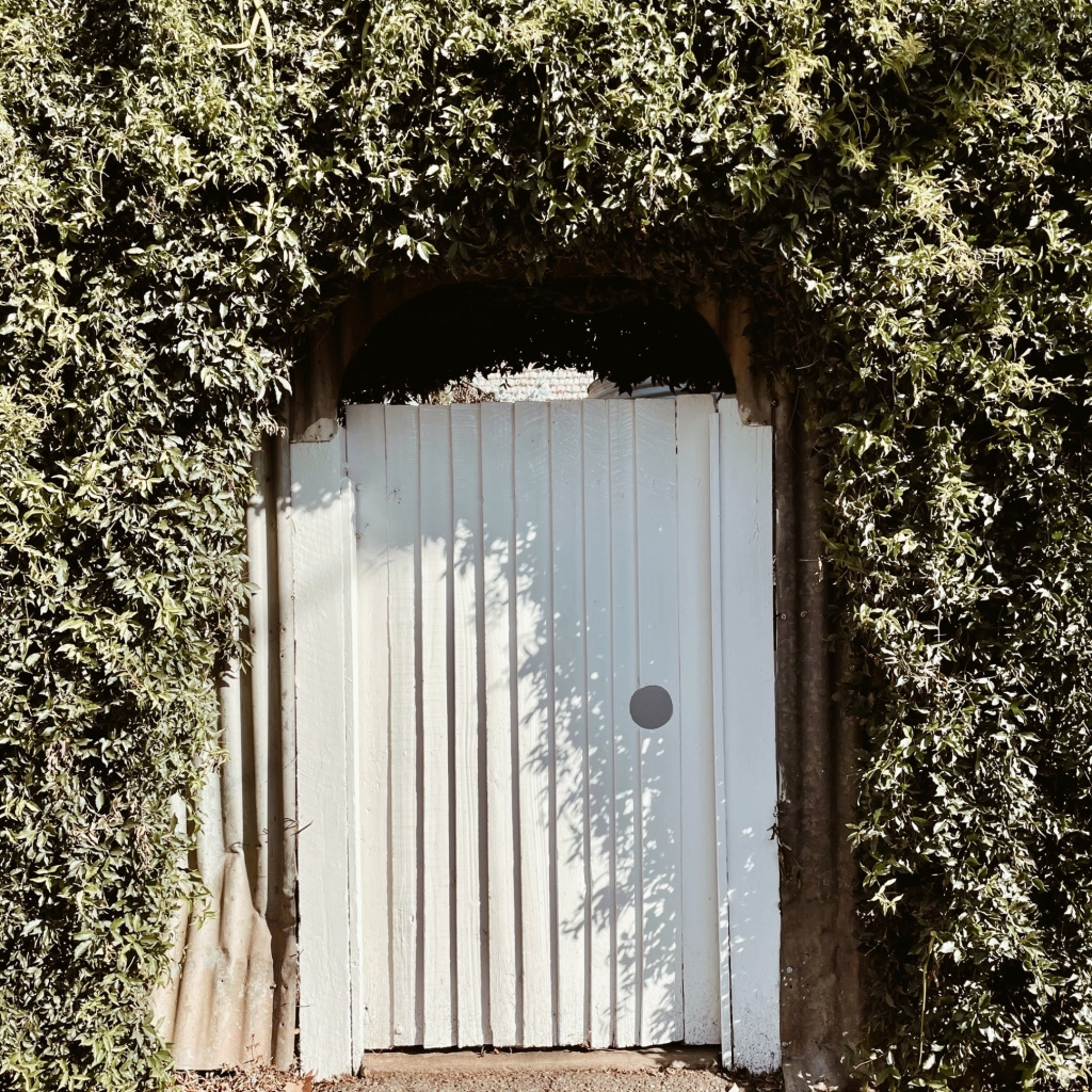 White picket gate, surrounded by green hedges.
