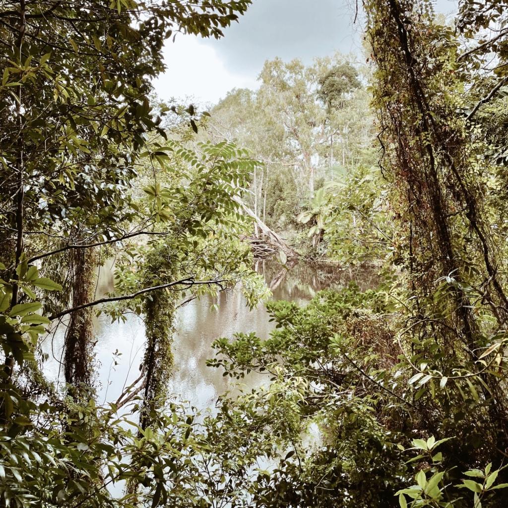 Looking through lush rainforest vegetation towards Water Park Creek in Byfield National Park, Queensland, Australia.