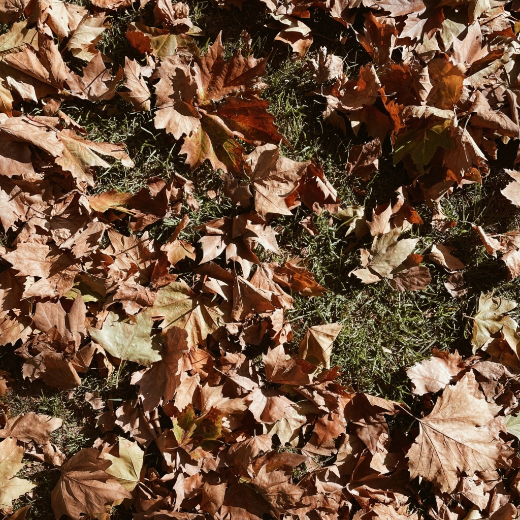 Looking down on autumnal leaves on green grass.