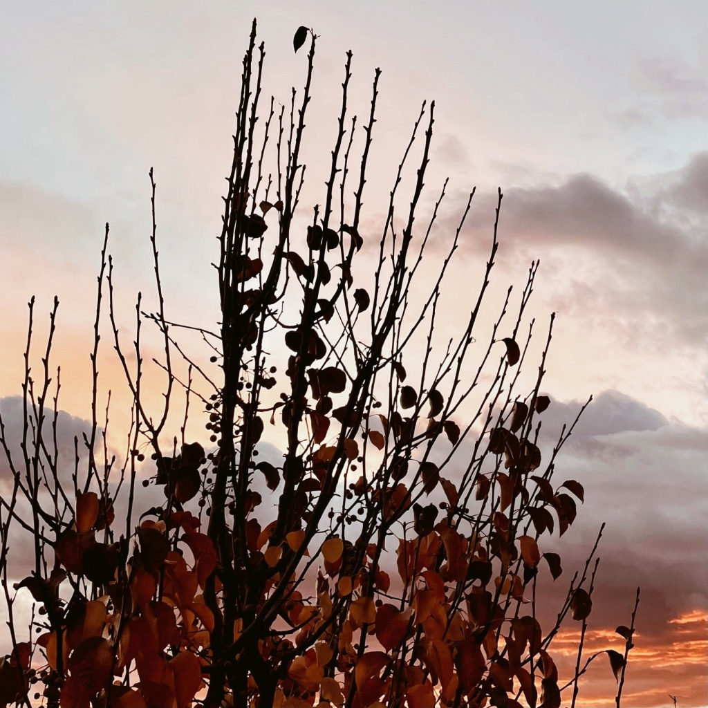 Looking through the bare limbs of a tree to fiery and cloudy sky at sunset