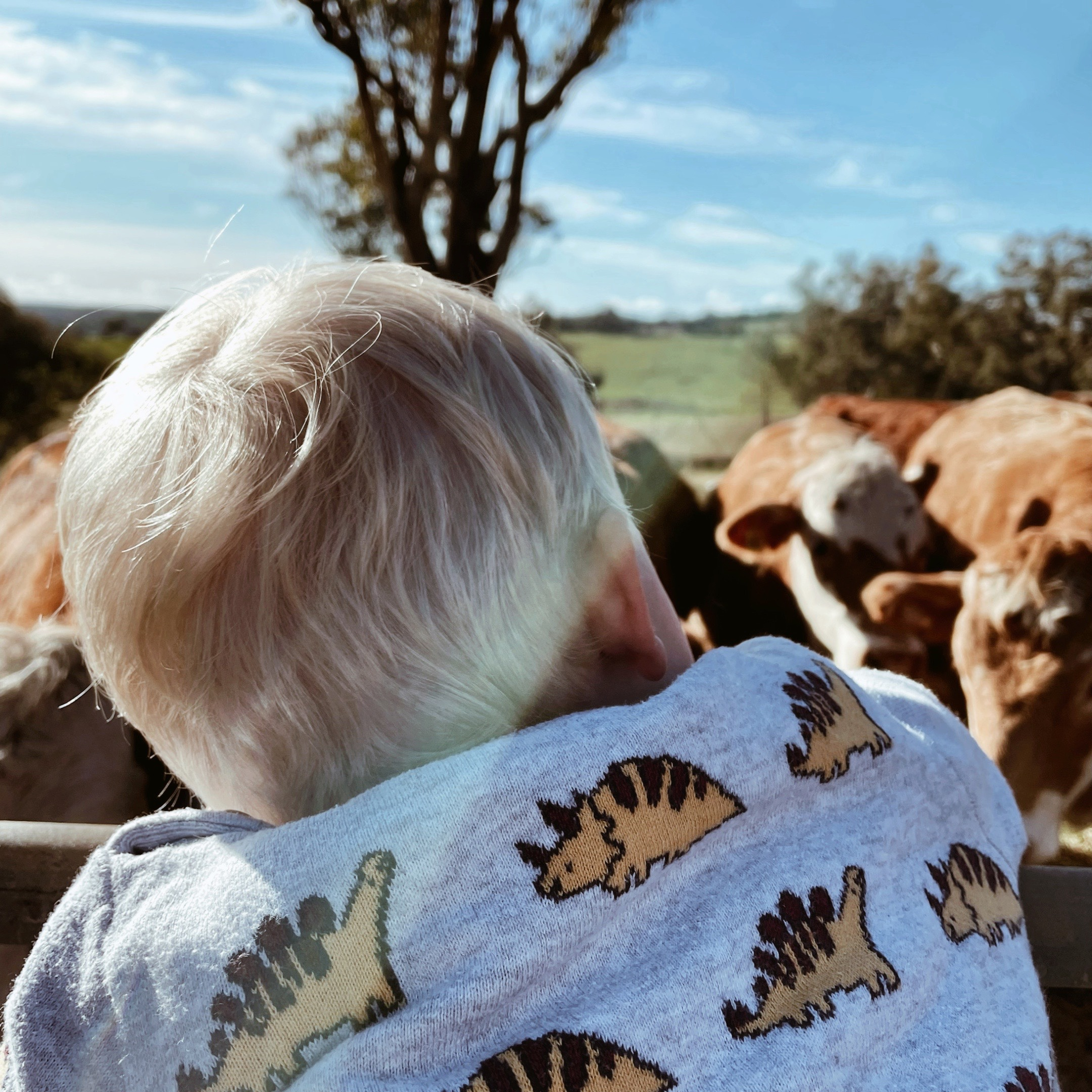 Back of a toddler boy's head looking into a paddock of cows.
