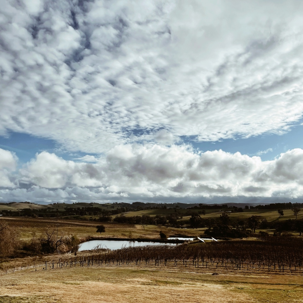 Looking out over the vines at Courabyra Winery, Tumbarumba, New South Wales, Australia.