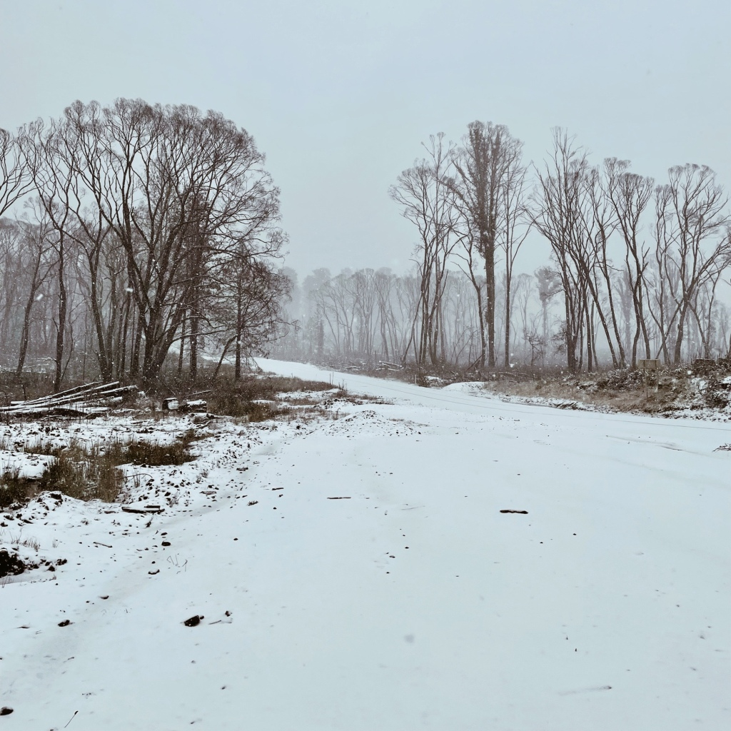 Snowy road and bare trees near Laurel Hill, New South Wales, Australia.