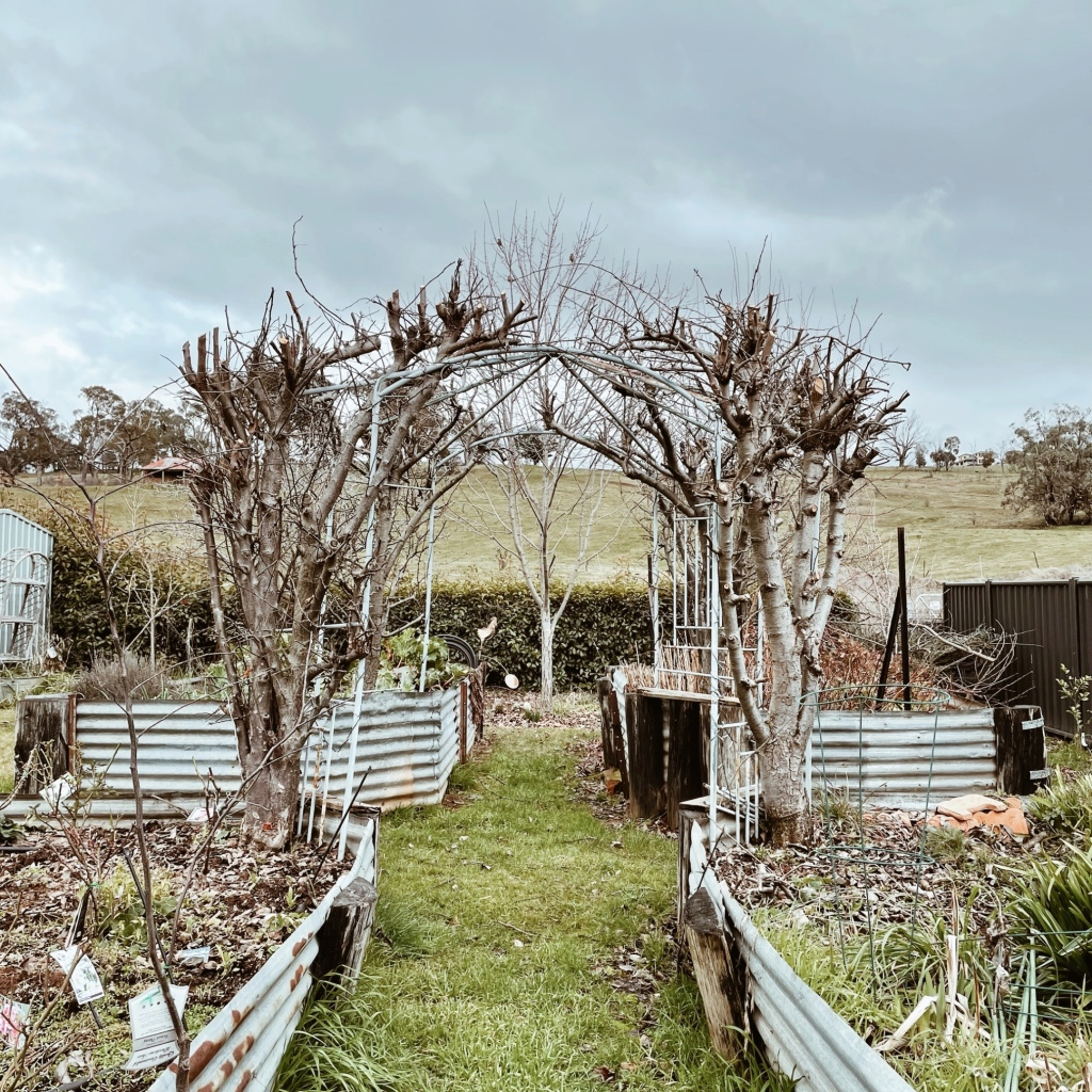 The garden at Magenta Cottage in Tumbarumba, New South Wales, Australia.