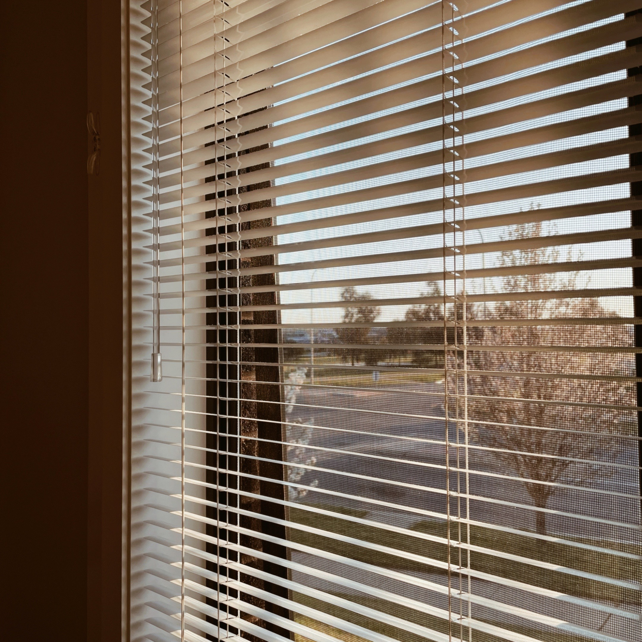 Looking through blinds out on a front yard bathed in late afternoon light.