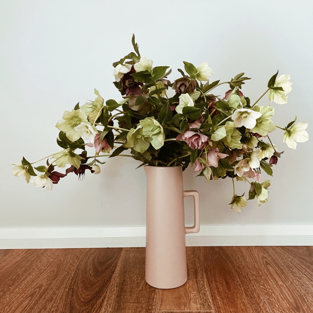 Pink, white and green hellebores in a tall pink vase.